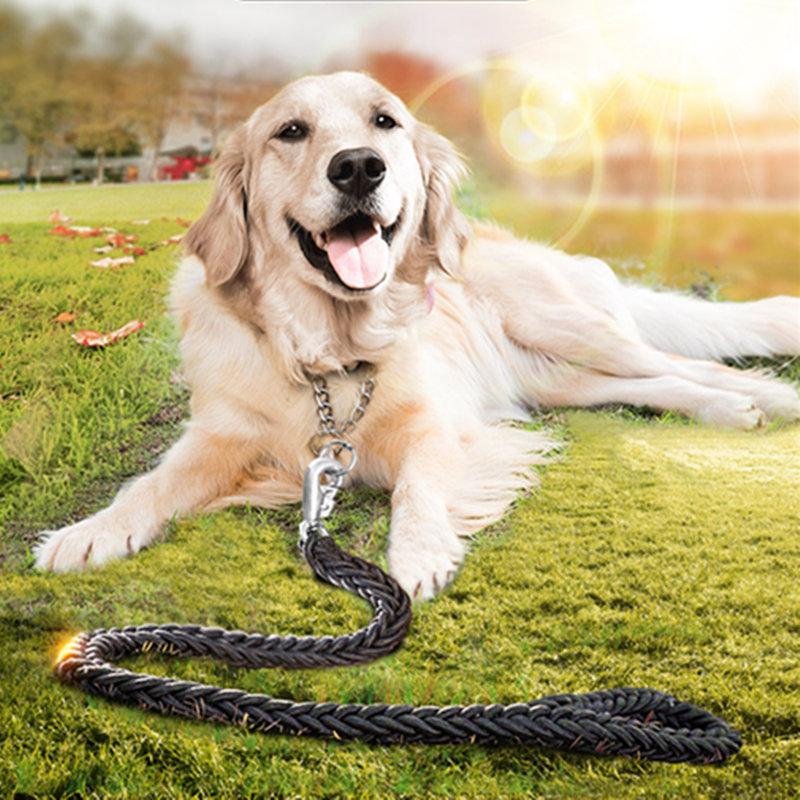 Como entrenar perros Golden Retriever como entrenar a Golden retri